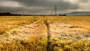 Moody Wheat Fields / Ben Cremin